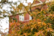 Tech Tower and leaves from a Japanese maple tree